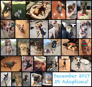December 2017 Adoption Round Up! 29 Adoptions!