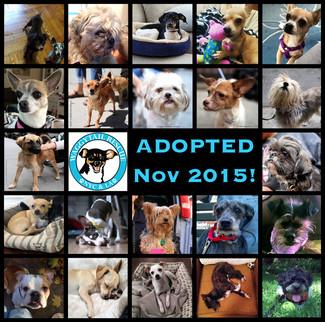 November Adoption RoundUp!