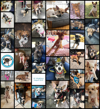 31 Days of August, 31 Adoptions!