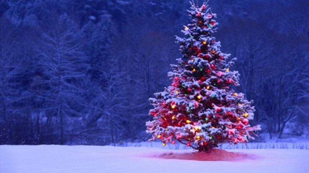 Le luci (calde) degli addobbi dell'albero offrono un valido controcanto alla luce fredda che domina complessivamente la scena