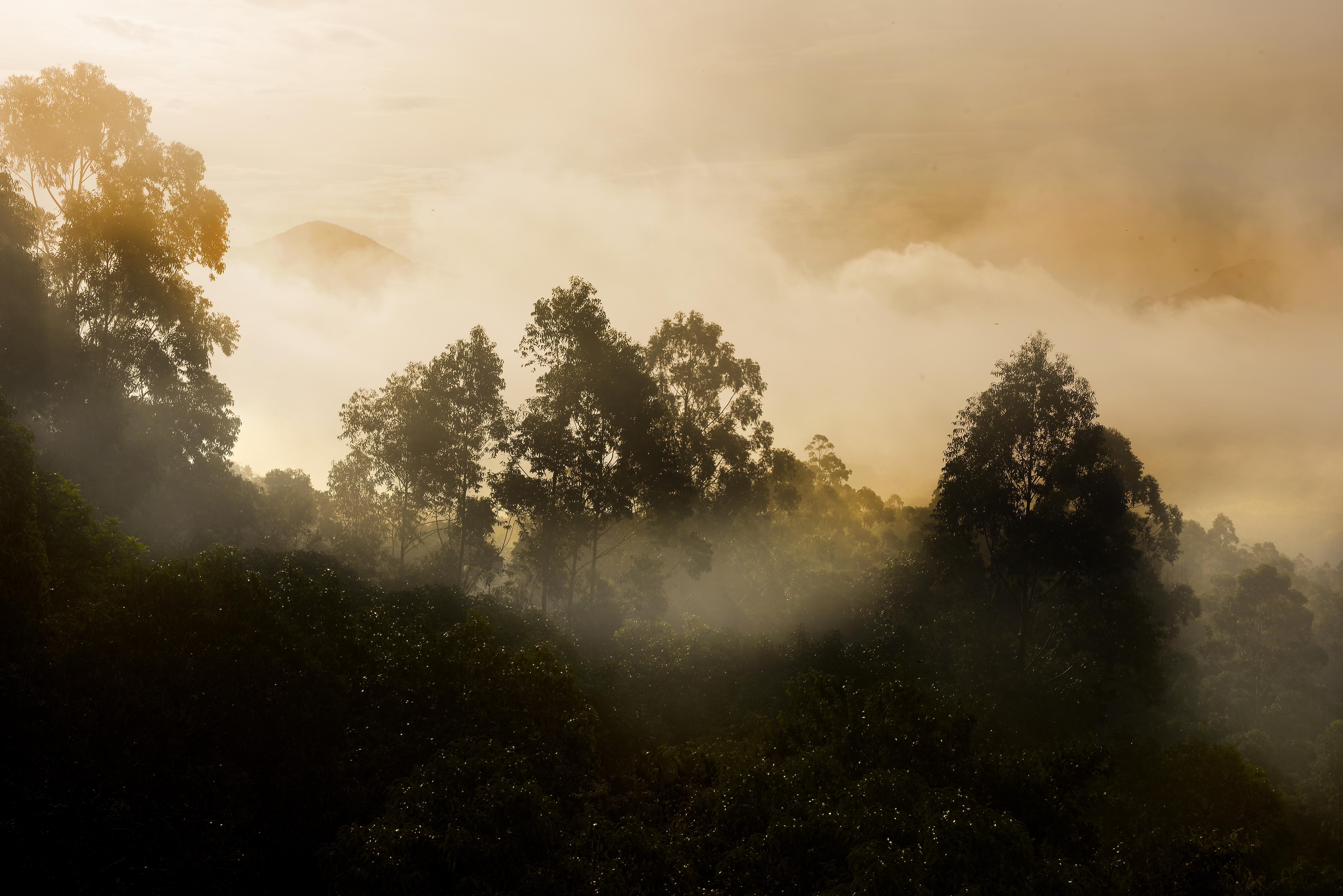 Nubi sulla foresta