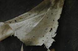 flag1 - Copia