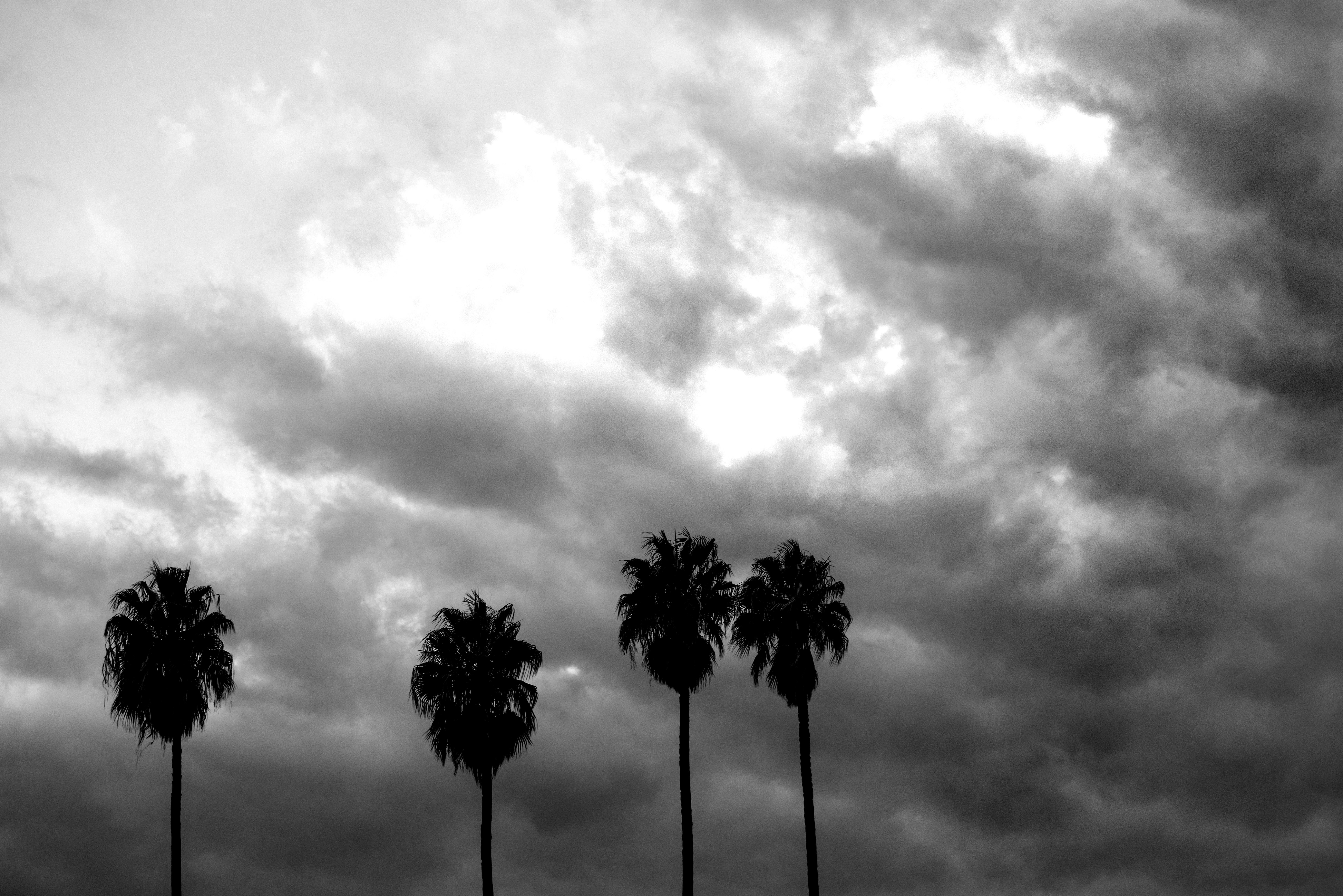 il cielo e le palme