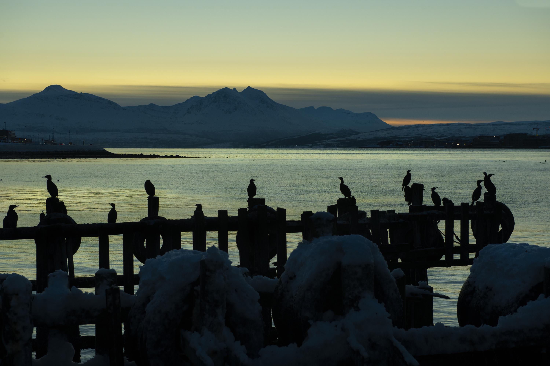 Cormorani al tramonto