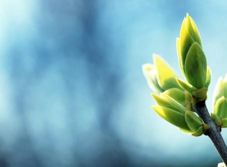 Un'idea per fotografare: sboccia la primavera