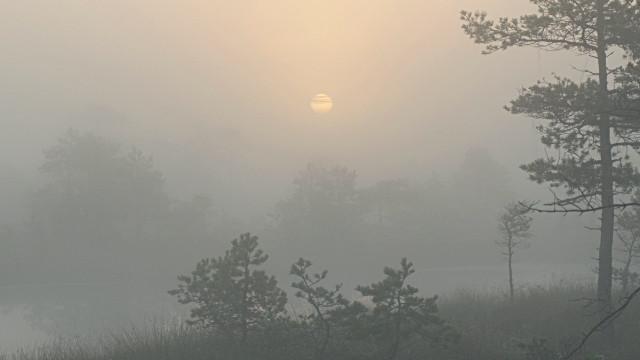 Sunrise over marshland ponds and trees through thick fog