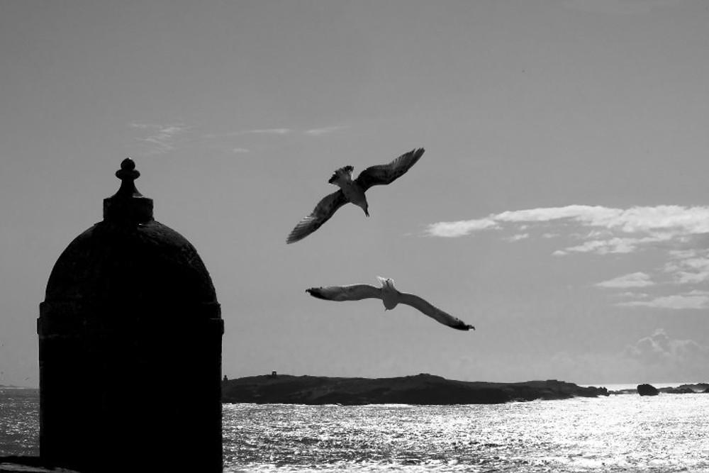 essaouira - seagulls