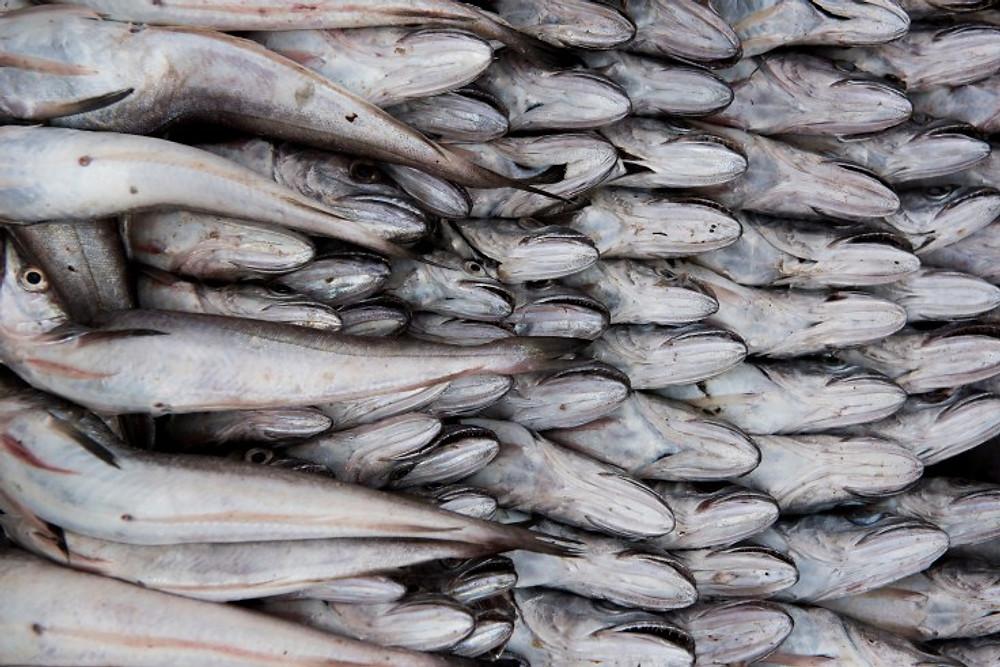 pesci a essaouira