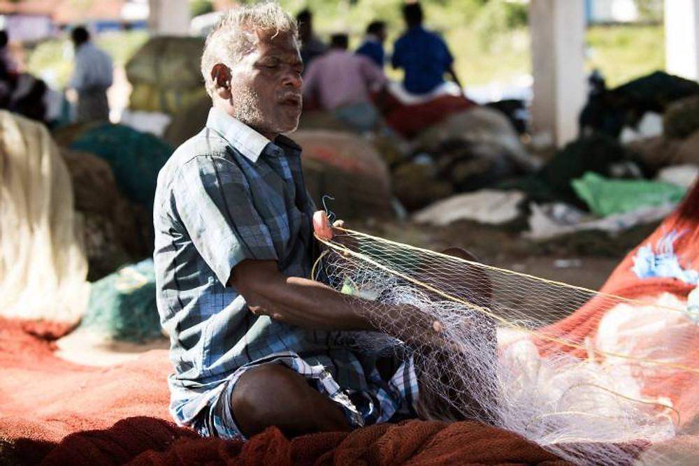 pescatore - kerala
