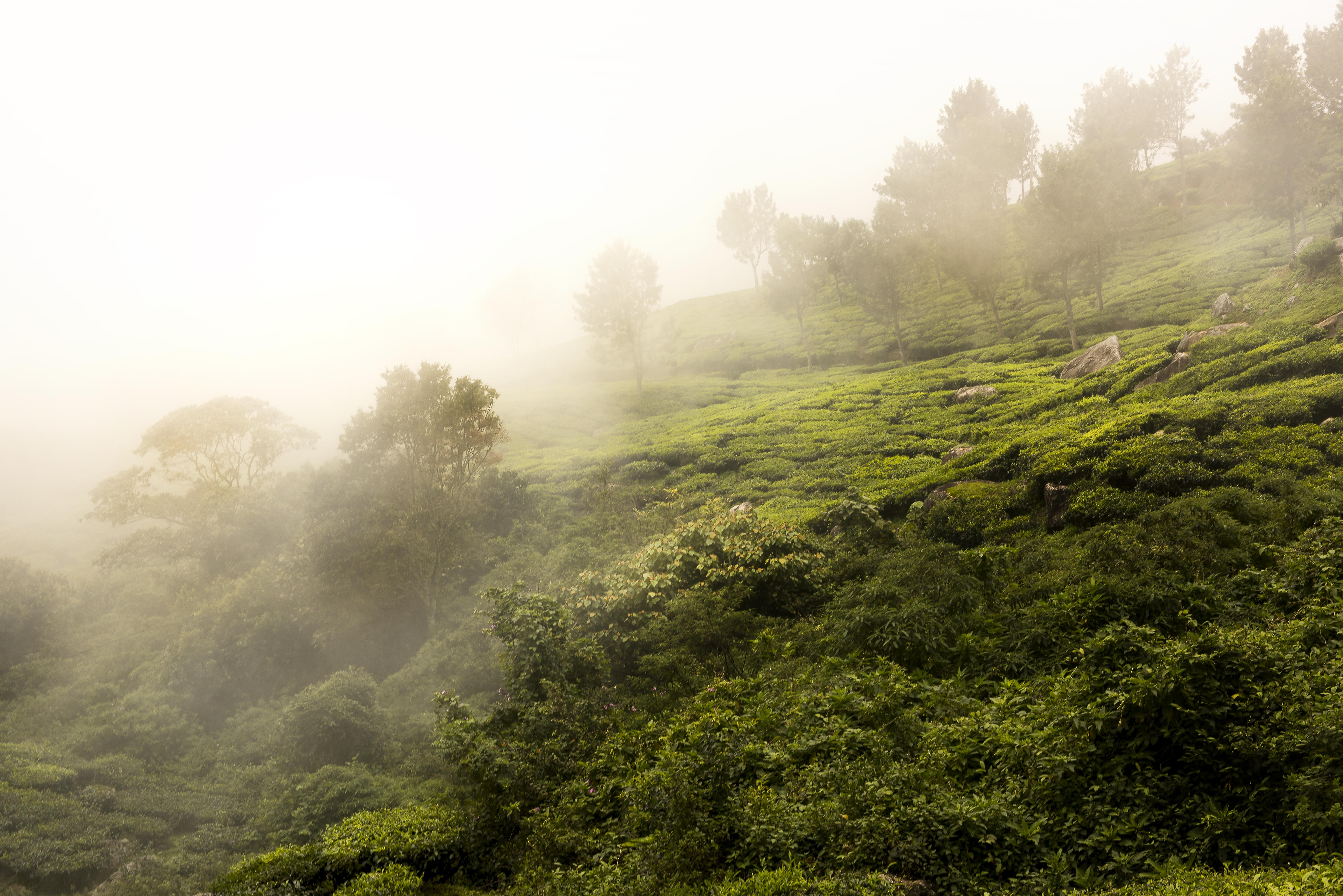 Nuvole sulle piantagioni di tè