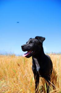 dog-field