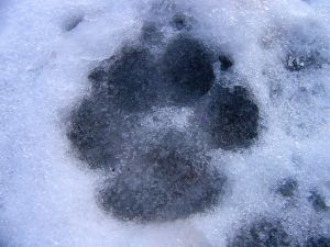 dog-gone-winter-470890-m