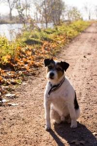 fall_dog