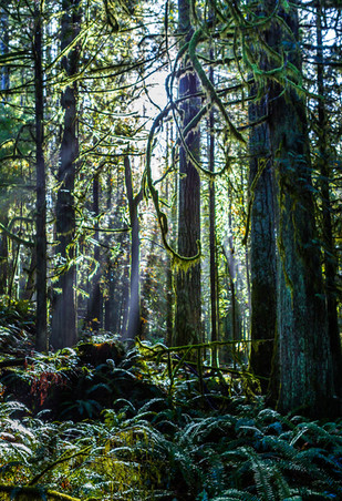 Forest_after_rain.JPG