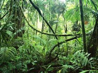 dentro de la selva.jpg