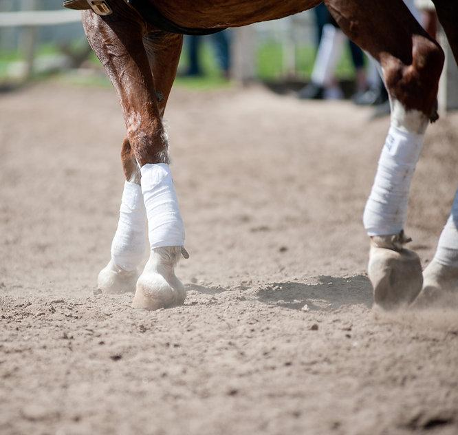 Web design & development for small business - equestrian