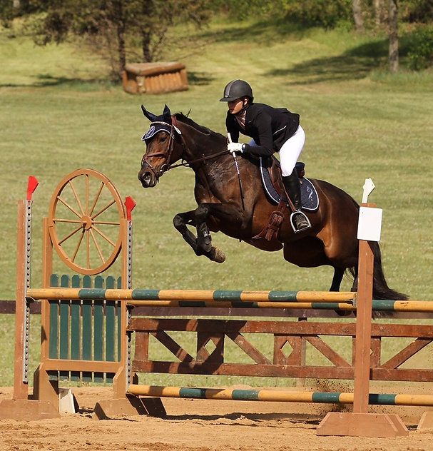 Web design & ecommerce for small equestrian businesses