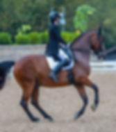 Web design & development for small equestrian businesses