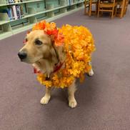Maple's Halloween Costume