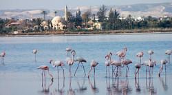 Larnaka Salt Lake
