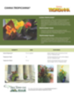 Canna Tropicanna Information Sheet_Page_