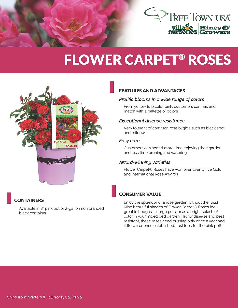 Flower Carpet Information Sheet_Page_1.j