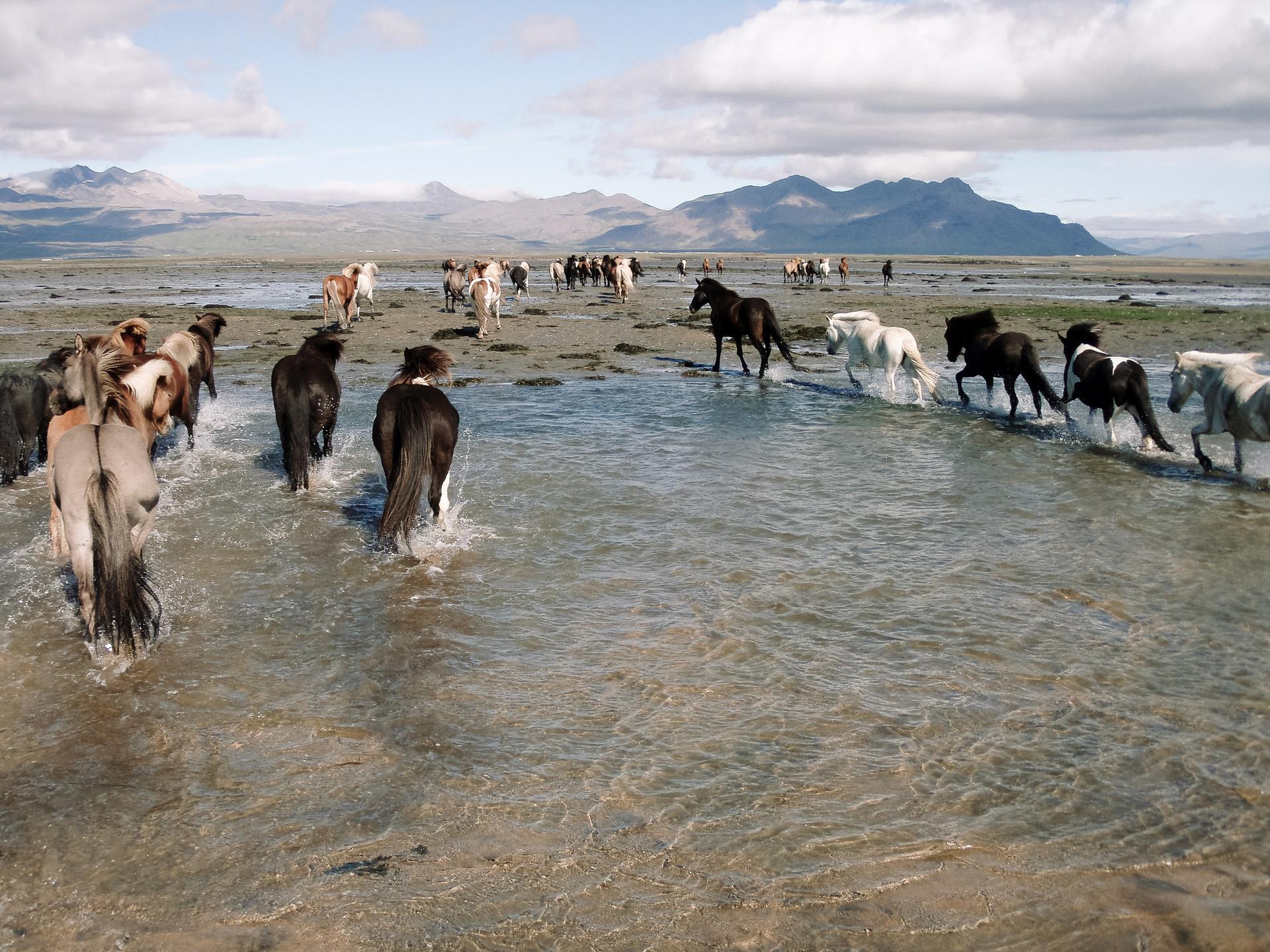 islande.JPG.jpg