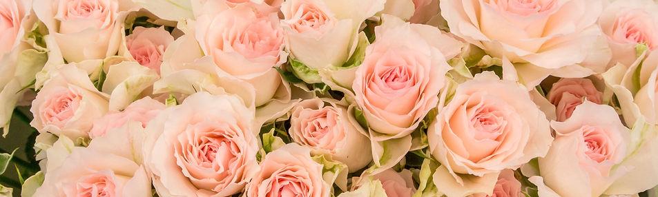 癒しのパワーいっぱいのバラのは花