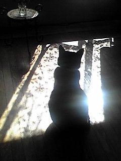 太陽の気を受けてリラックスするネコ