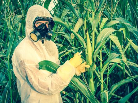 Are GMOs Bad??