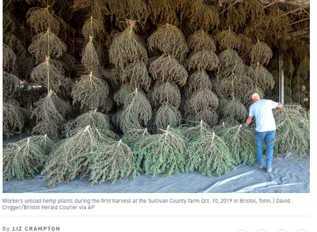 POLITICO: Prominently Features The Hemp Guy