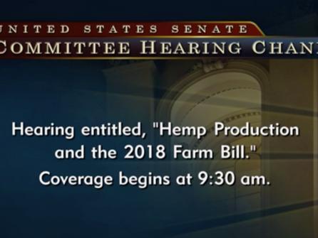 Hemp Hearing in the Senate