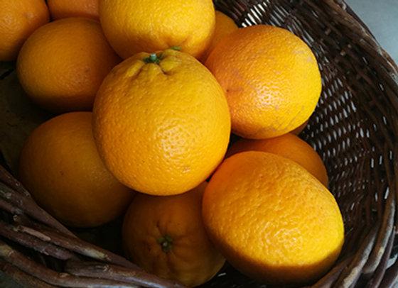 Orange navelate