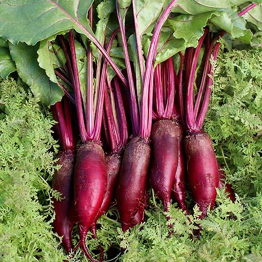 Free Beets Day