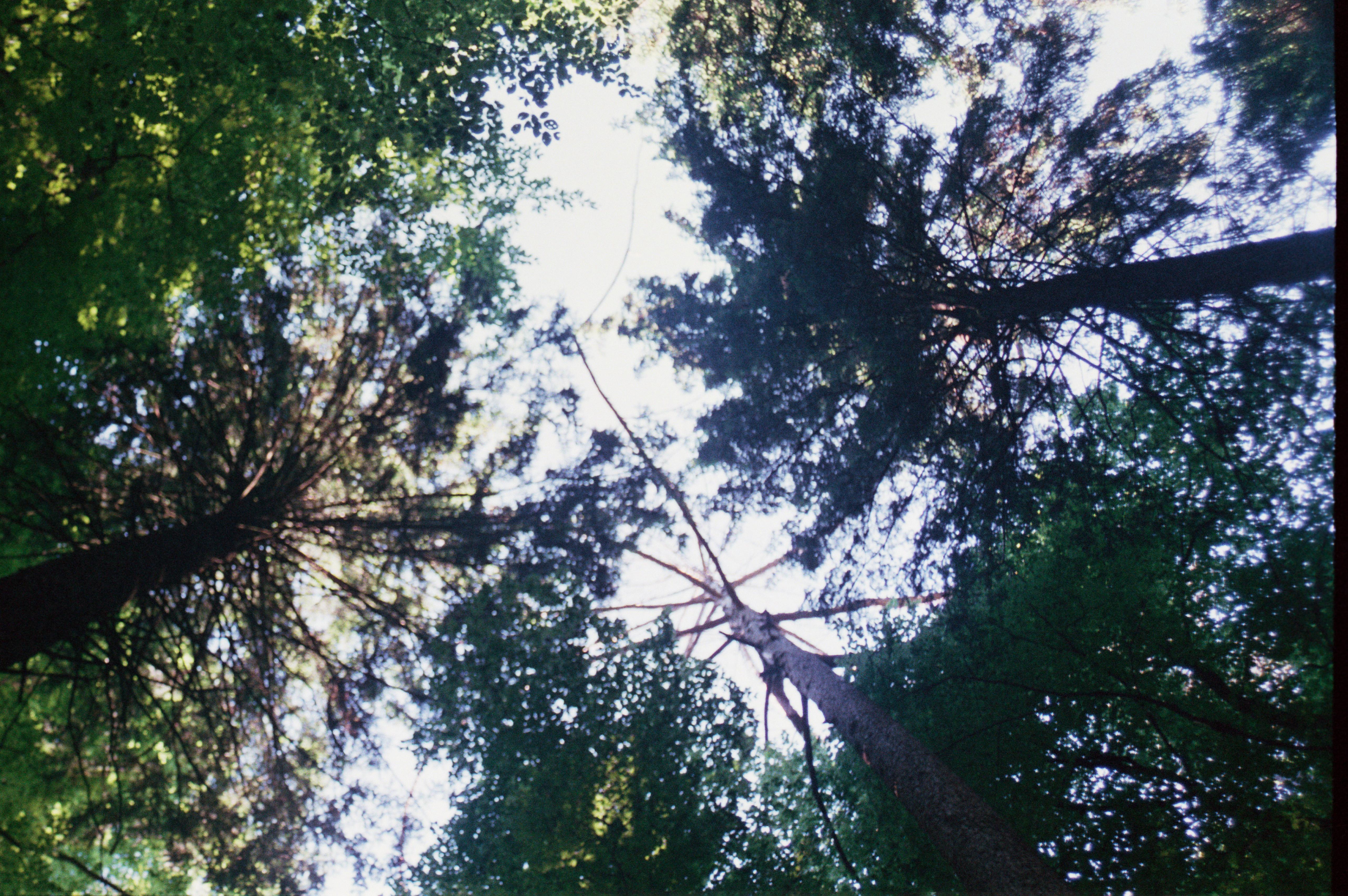 Wald nach oben