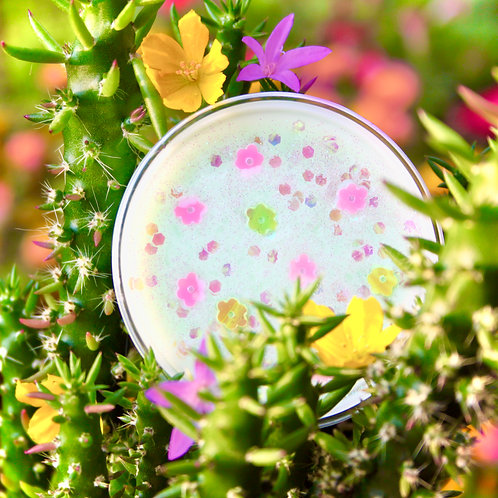 Sun-Kissed Island Cactus Wax Melt Pot