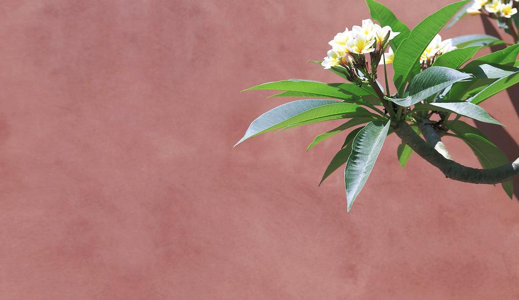 ArtaFlora de kunst van een goed geschenk. Schilderij van een iris.