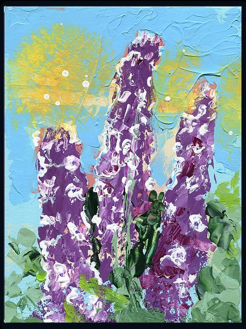 Ridderspoor | Delphinium Astola