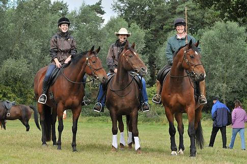 Parelli Natural Horsemanship