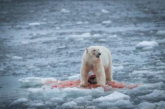 Svalbard-3490.jpg