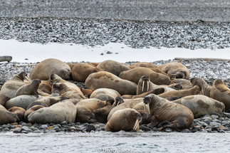Svalbard-2724.jpg