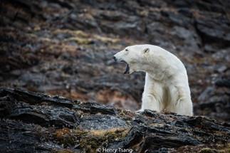 Svalbard-4016.jpg
