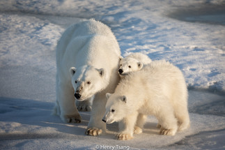 Svalbard-5803.jpg