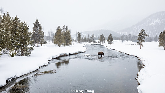Yellowstone, USA