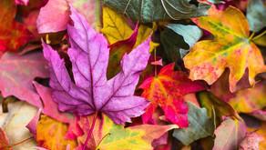 Οι αλλαγές: Για ένα πιο εύκολο φθινόπωρο