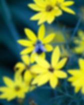 nature-bee-flowers-plants-139380.jpeg