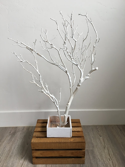 "White 25""-30"" Manzanita Tree in Box"