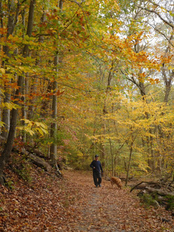 Preserving Rock Creek Park