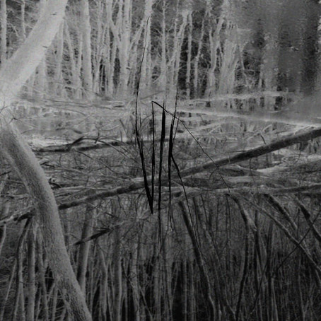 "VLK ""Transdescendence"" Album Review"