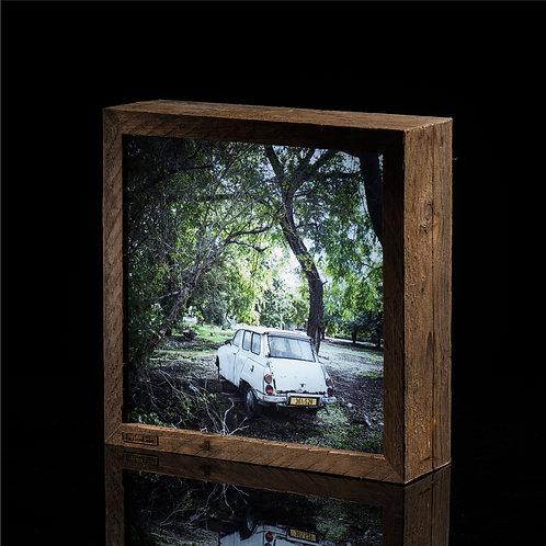 תמונת אור > רכב מתחת עץ